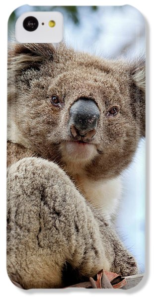 Koala (phascolarctos Cinereus IPhone 5c Case