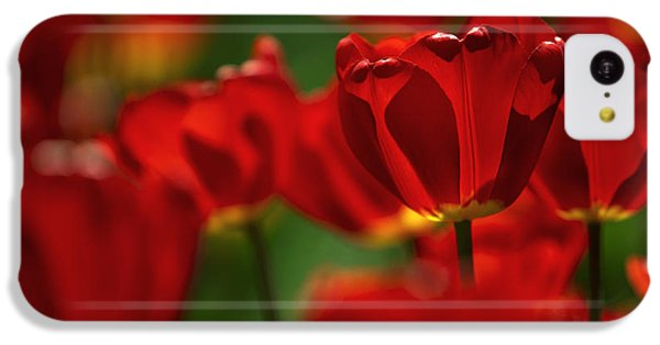 Red And Yellow Tulips IPhone 5c Case by Nailia Schwarz