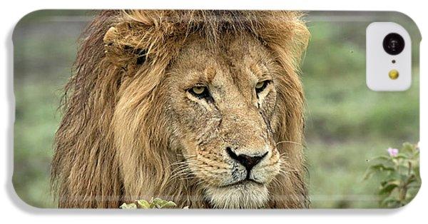 Africa, Tanzania, Serengeti IPhone 5c Case