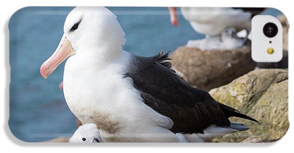 Black-browed Albatross (thalassarche IPhone 5c Case by Martin Zwick