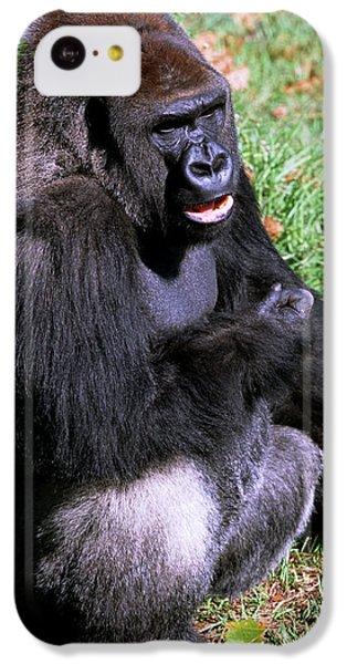 Silverback Western Lowland Gorilla IPhone 5c Case