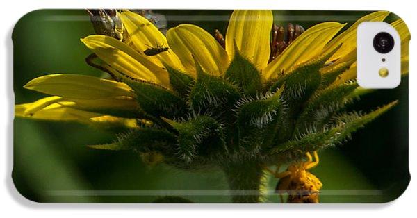 A Bugs World IPhone 5c Case by Ernie Echols