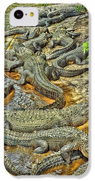 A Congregation Of Alligators IPhone 5c Case by Rona Schwarz
