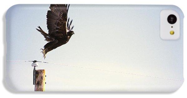 Falcon iPhone 5c Case - A Falcon Takes To The Air by Heath Korvola
