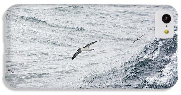 A Grey Headed Albatross IPhone 5c Case