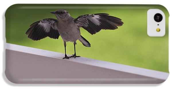 A Little Visitor Northern Mockingbird IPhone 5c Case by Terry DeLuco
