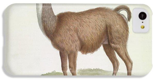 Llama iPhone 5c Case - A Male Llama by British Library