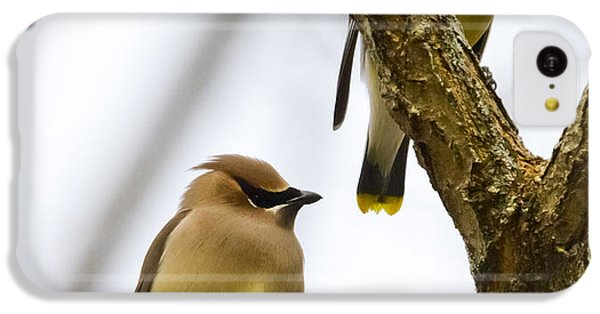 A Pair Of Cedar Waxwings IPhone 5c Case
