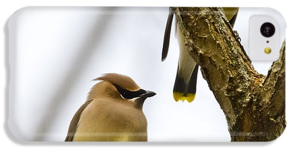 IPhone 5c Case featuring the photograph A Pair Of Cedar Waxwings by Ricky L Jones