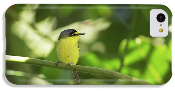 Flycatcher iPhone 5c Case - A Yellow-lored Tody Flycatcher by Alex Saberi