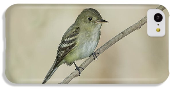 Acadian Flycatcher IPhone 5c Case by Anthony Mercieca