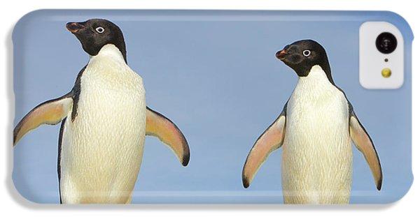 Adelie Penguin Duo IPhone 5c Case by Yva Momatiuk John Eastcott