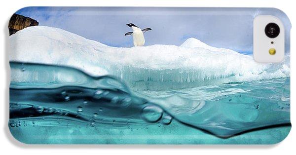Penguin iPhone 5c Case - Adelie Penguin On Iceberg by Justin Hofman