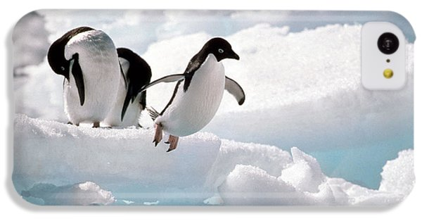 Adelie Penguins IPhone 5c Case by Art Wolfe