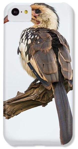 Africa Tanzania Red-billed Hornbill IPhone 5c Case