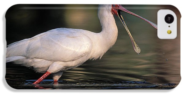 African Spoonbill IPhone 5c Case by Nigel Dennis