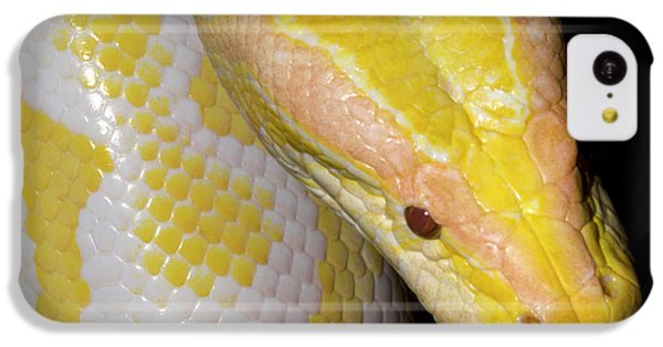 Python iPhone 5c Case - Albino Burmese Python by Nigel Downer