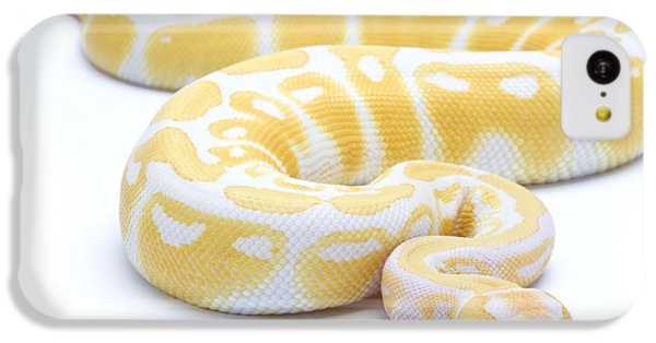 Albino Royal Python IPhone 5c Case