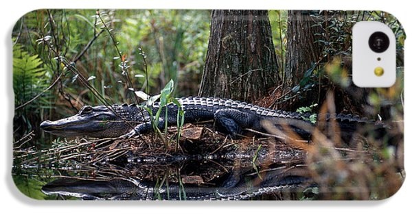 Alligator In Okefenokee Swamp IPhone 5c Case by William H. Mullins
