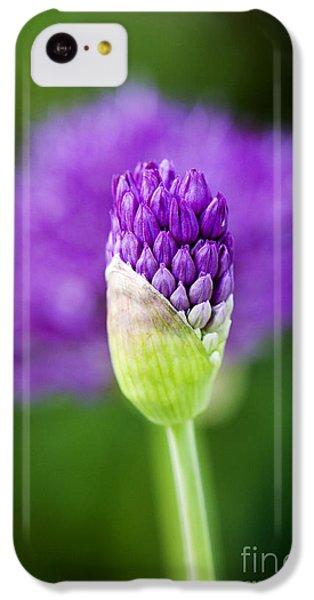 Allium Hollandicum Purple Sensation IPhone 5c Case