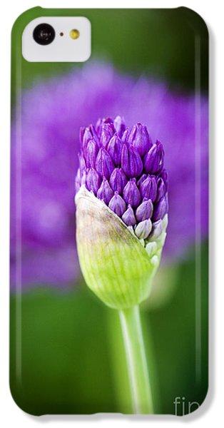 Allium Hollandicum Purple Sensation IPhone 5c Case by Tim Gainey