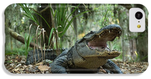 American Alligator (alligator IPhone 5c Case by Pete Oxford