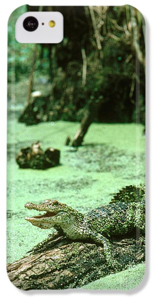 American Alligator IPhone 5c Case by Gregory G. Dimijian, M.D.