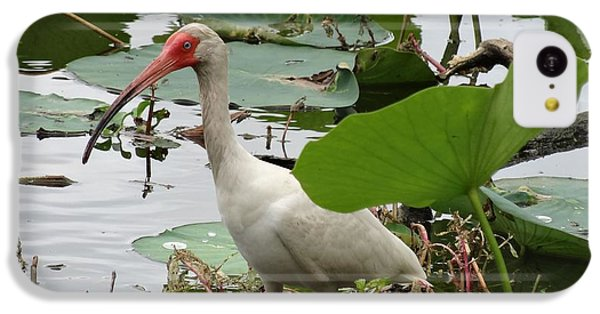 American White Ibis In Brazos Bend IPhone 5c Case by Dan Sproul