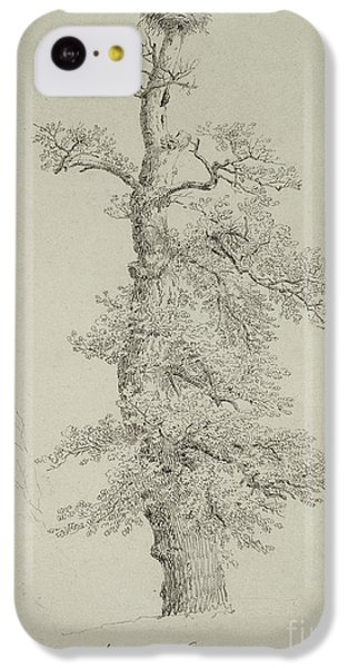 Ancient Oak Tree With A Storks Nest IPhone 5c Case