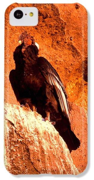 Andean Condor IPhone 5c Case