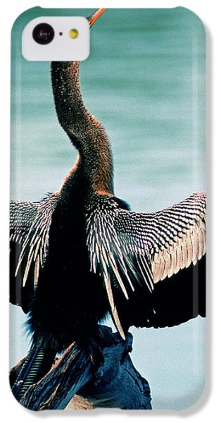 Anhinga Anhinga Anhinga Drying Feathers IPhone 5c Case