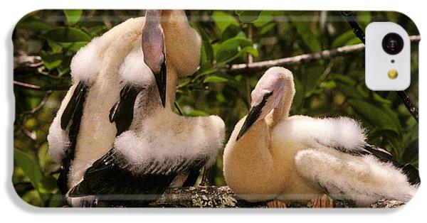 Anhinga Chicks IPhone 5c Case by Ron Sanford