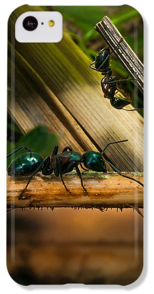 Ant iPhone 5c Case - Ants Adventure 2 by Bob Orsillo