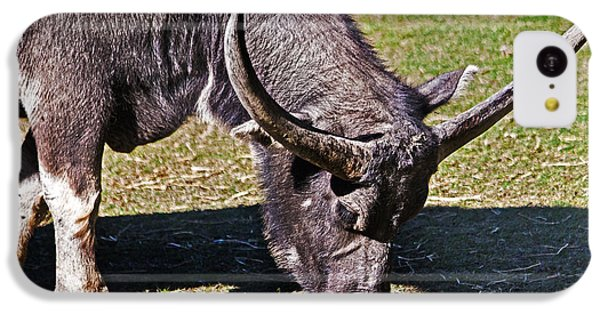Asian Water Buffalo  IPhone 5c Case
