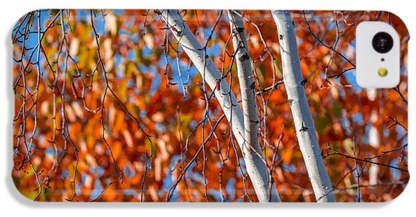 IPhone 5c Case featuring the photograph Aspen by Sebastian Musial