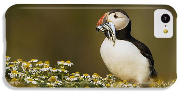 Atlantic Puffin Carrying Fish Skomer IPhone 5c Case by Sebastian Kennerknecht