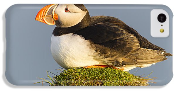 Atlantic Puffin Iceland IPhone 5c Case by Peer von Wahl
