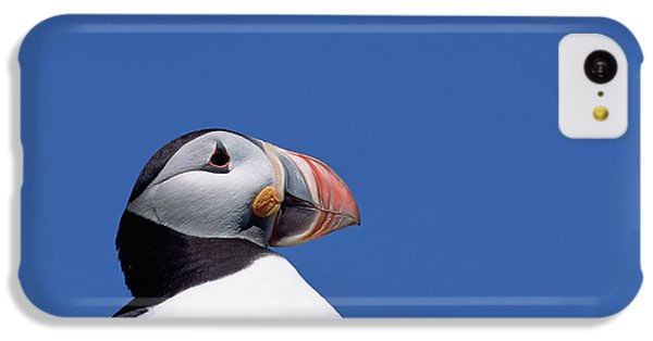 Atlantic Puffin In Breeding Colors IPhone 5c Case by