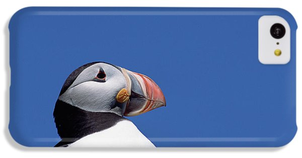 Atlantic Puffin In Breeding Colors IPhone 5c Case by Yva Momatiuk and John Eastcott