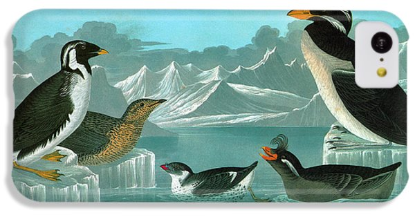 Audubon Auks IPhone 5c Case