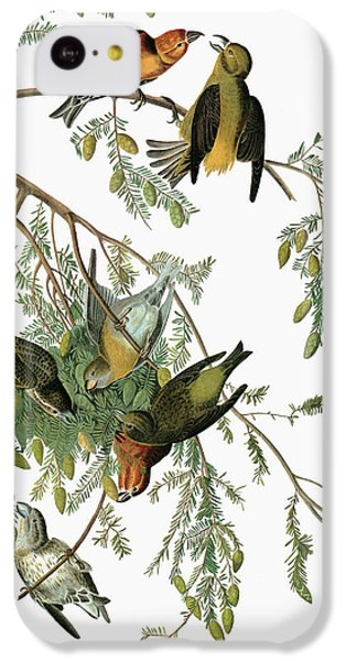 Audubon Crossbill IPhone 5c Case
