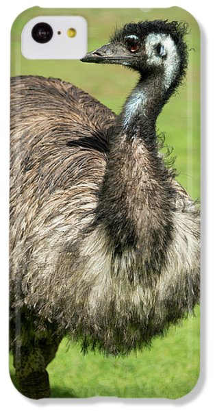 Emu iPhone 5c Case - Australia, South Australia, Adelaide by Cindy Miller Hopkins