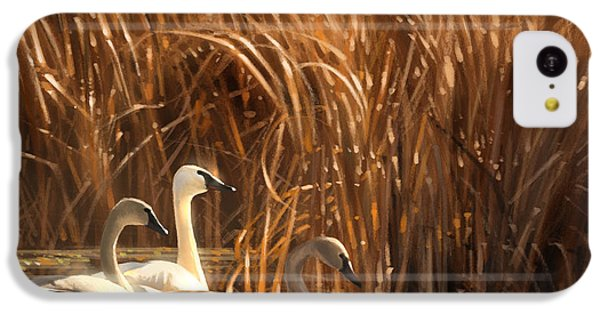 Swan iPhone 5c Case - Autumn Light- Trumpeter Swans by Aaron Blaise