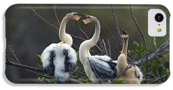 Baby Anhinga IPhone 5c Case by Mark Newman