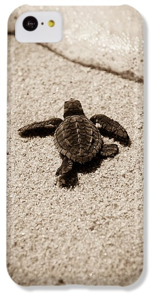 Baby Sea Turtle IPhone 5c Case by Sebastian Musial