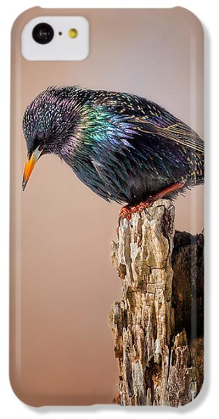 Backyard Birds European Starling IPhone 5c Case by Bill Wakeley