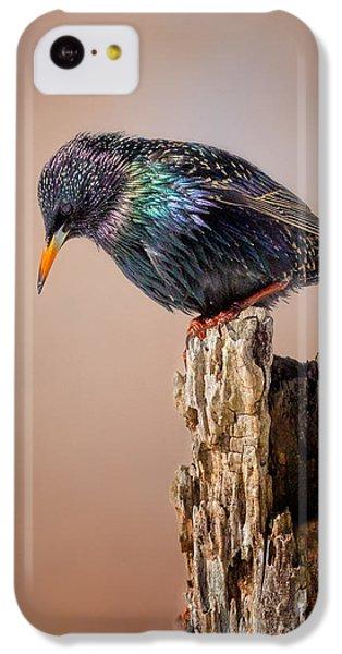 Backyard Birds European Starling IPhone 5c Case