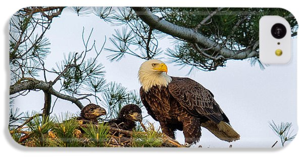 Bald Eagle With Eaglets  IPhone 5c Case