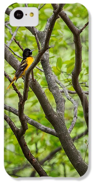Baltimore Oriole IPhone 5c Case by Bill Wakeley