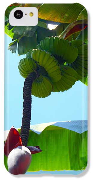 Banana Stalk IPhone 5c Case by Carey Chen